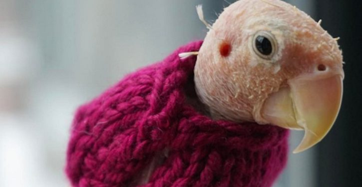 Who's up for another round of 'People who knit sweaters for birds'?