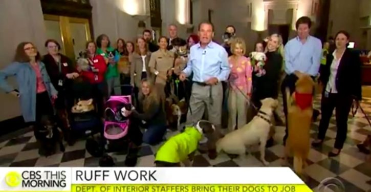 The Dogs of Interior: Bringing the real brain trust to work