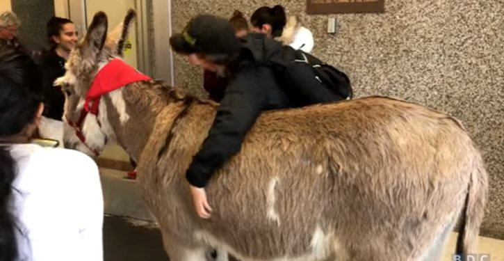 The ritual college students now need Play-Doh, therapy dogs, 900-lb donkeys to cope with