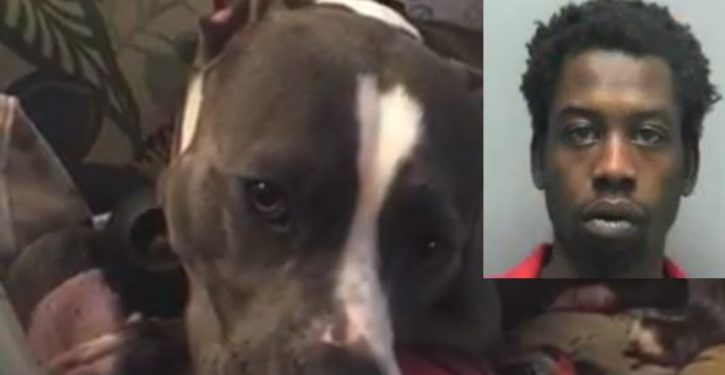 Man stabbed his girlfriend's dog to death for siding with her in arguments