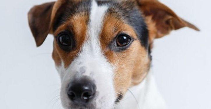 'My dog underwent gender reassignment surgery'