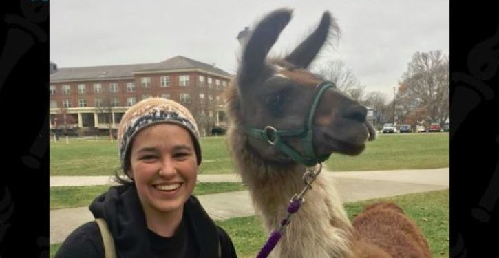 Not The Onion: Colleges recruit 'therapy llamas' to calm the nerves of stressed students