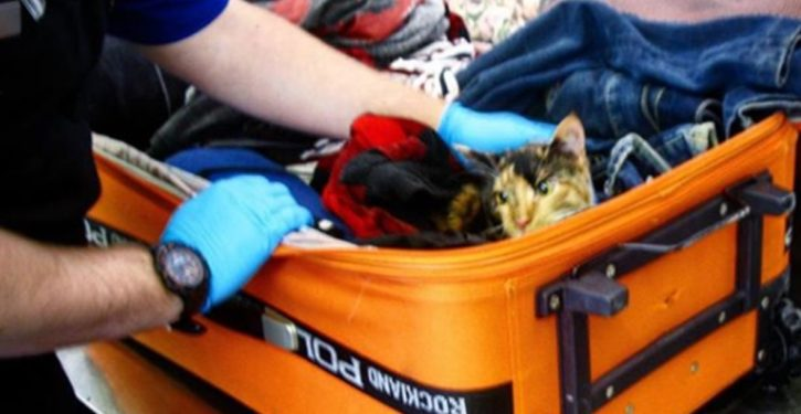 Cat found in checked luggage at Pennsylvania airport