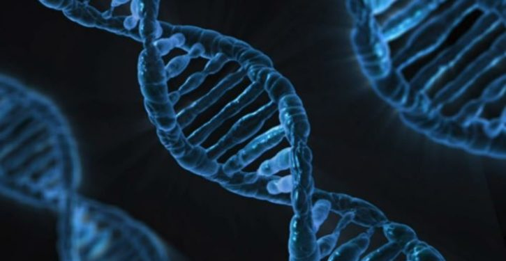 Alzheimer's gene neutralised in human brain cells for the first time