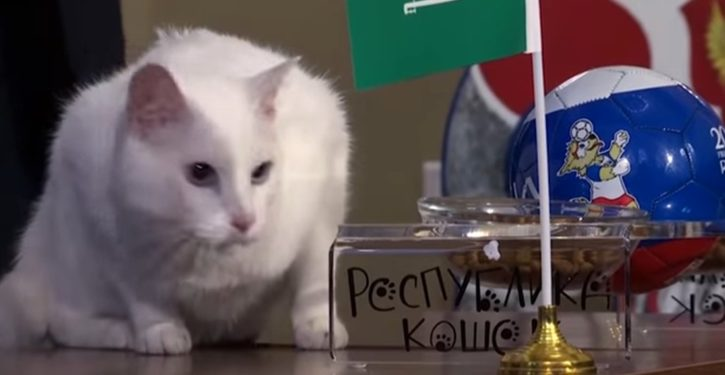 World Cup kicks off in Russia with curious 'psychic cat' ceremony