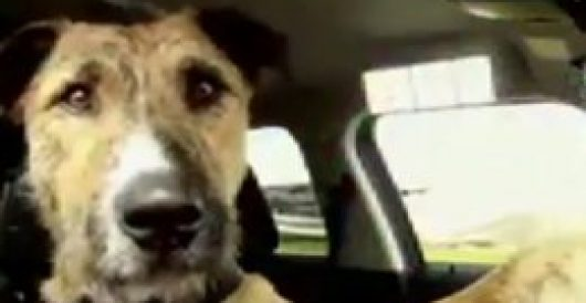 New Zealand dogs pass their driving tests by Howard Portnoy