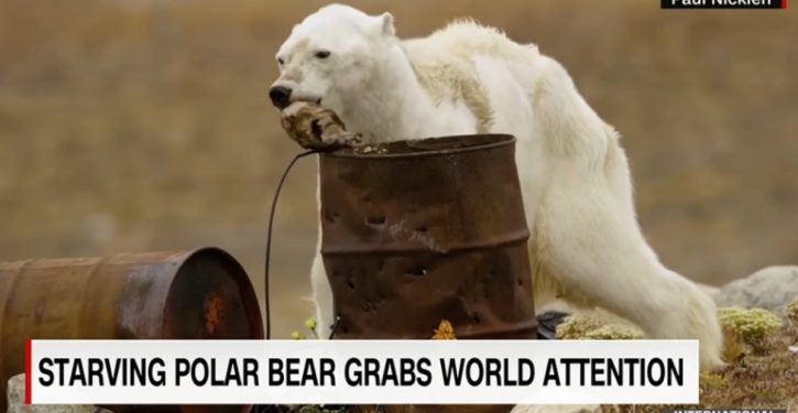 That viral 'emaciated polar bear' story? Now attributed to out-of-control editorializing