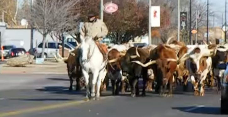 Oklahoma City: Rodeo bull escapes stockyards, leads police on chase through downtown