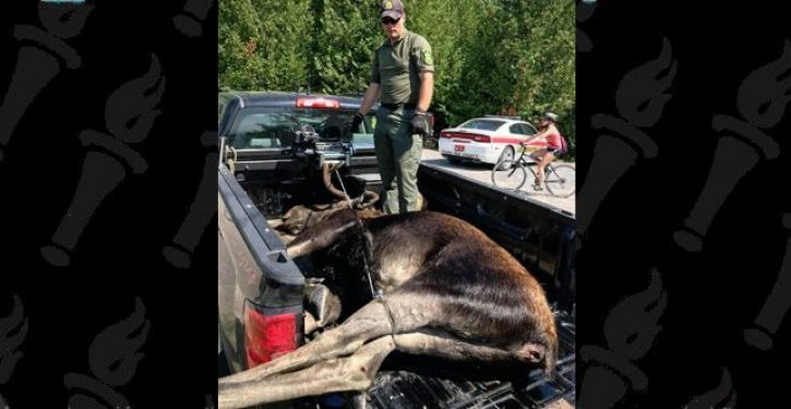 Moose drowns after people crowding to take pictures scare it into water