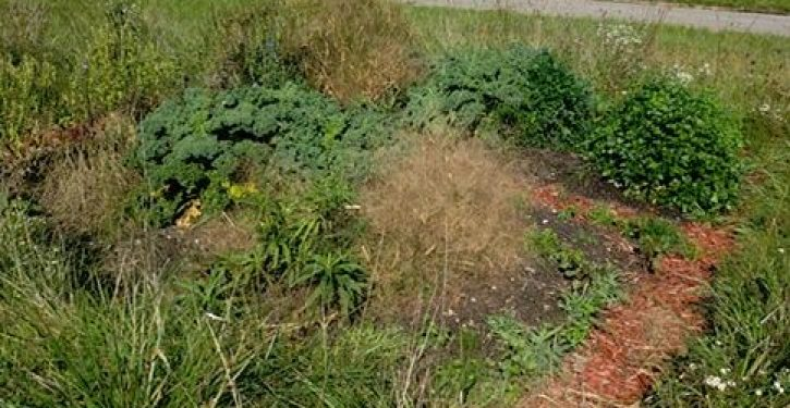 Kavanaugh Effect: Three women dislike man's 'community garden,' so they tell police he's a pedophile