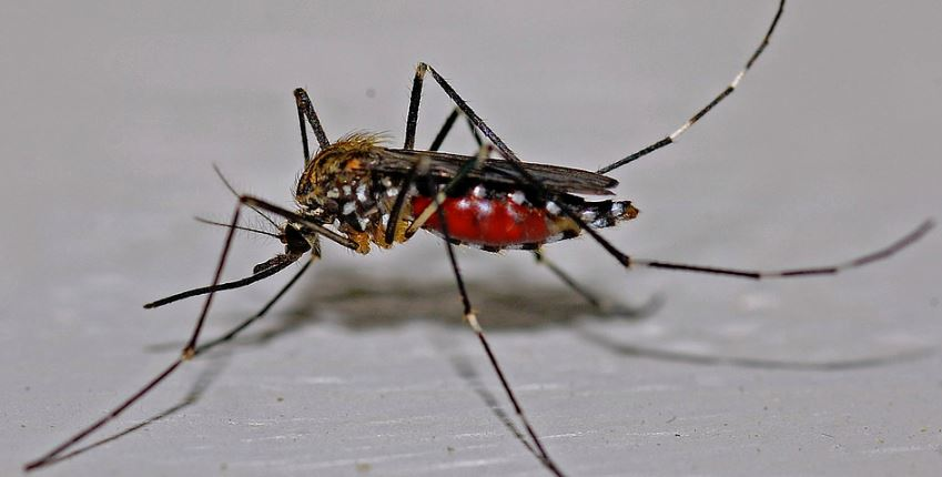 Mosquitoes infected with West Nile virus found in pandemic-stricken New York City