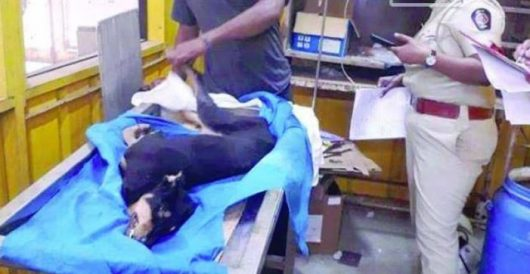 Dog tortured and 'raped' by drug addicts dies of injuries by LU Staff
