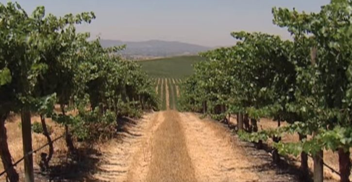 Harvard is buying up groundwater rights in California's Central Coast wine region