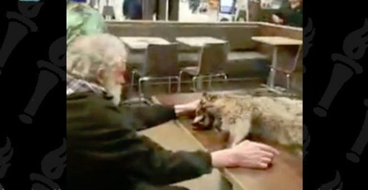 Man walks into McDonald's with dead raccoon