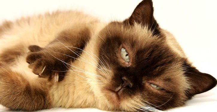 Round-up: Taxpayers still fund the darnedest things (Vivaldi therapy for cats, anyone?)