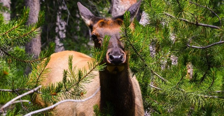 Hmm: 'Zombie deer' problem spreading in United States
