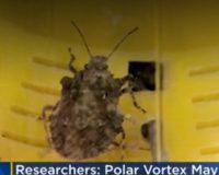 Researchers: Polar vortex may have killed off 95% of stink bugs