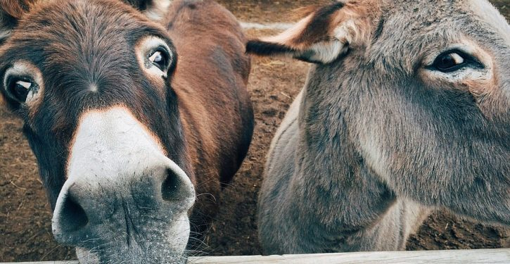 Students turn to therapy donkeys to help them de-stress