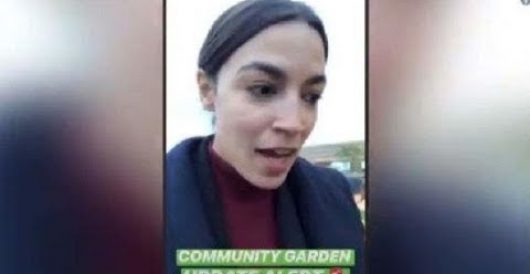 Ocasio-Cortez suggests growing cauliflower is a 'colonial approach' to environmentalism by Howard Portnoy