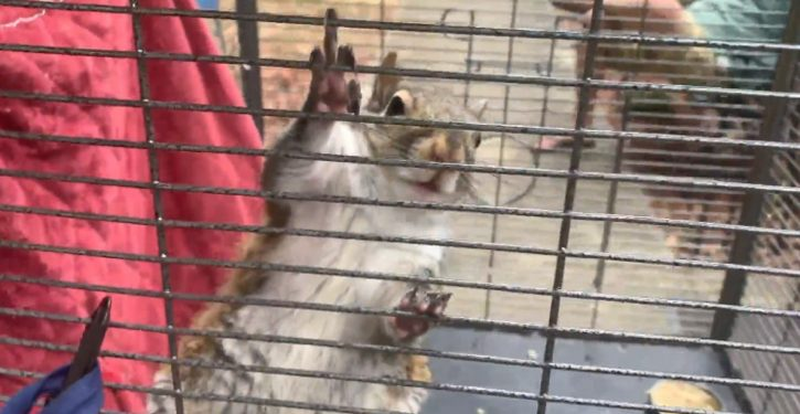 Alabama: Deputies find man feeding meth to 'attack squirrel' to keep it aggressive