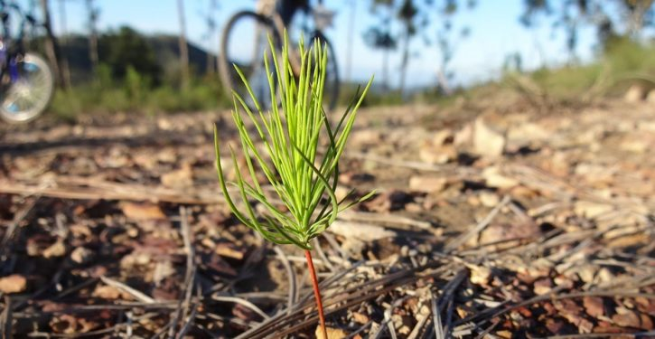 New proposal to combat climate change: Plant a trillion trees
