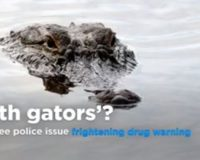 VIDEO: 'Please don't flush your drugs': Tennessee police warn of 'meth gators'