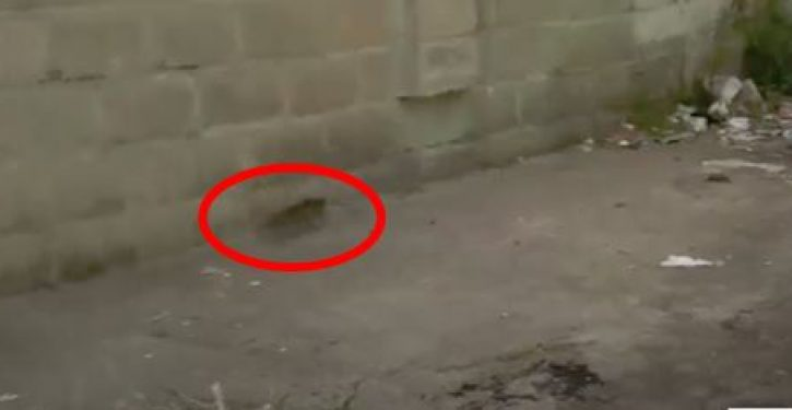 VIDEO: As if on cue, rat scurries across screen in news report from Cummings's district