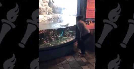 Awesome penguin keeps Ocasio-Cortez entertained; Left excited to predict meltdown from Right by LU Staff