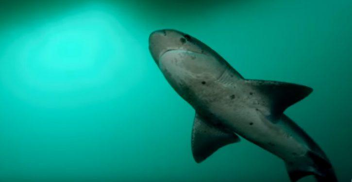 Fisherman lands shark; hero dog saves him when shark bites, opens artery