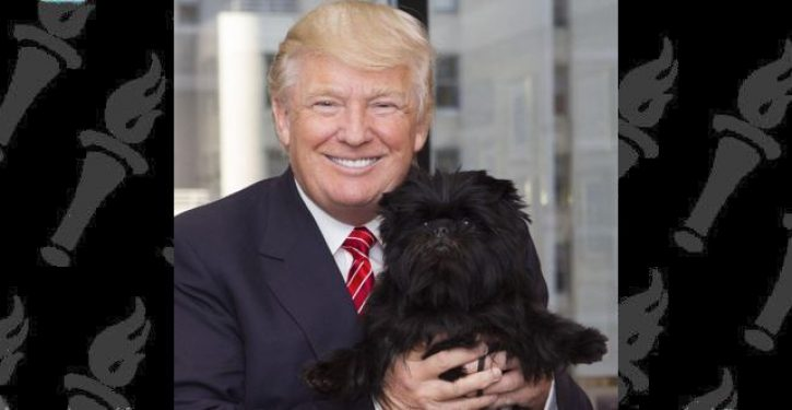 Why Donald Trump hates your dog