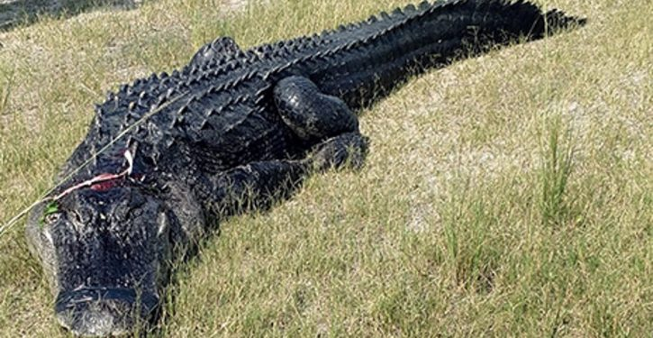 Florida man, found partially eaten in alligator's mouth, died beforehand from meth OD