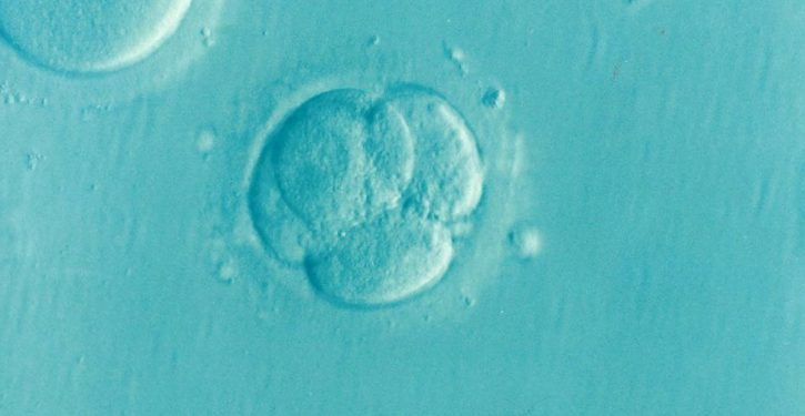Study paid Mexican women to get pregnant, then have embryos flushed from their bodies