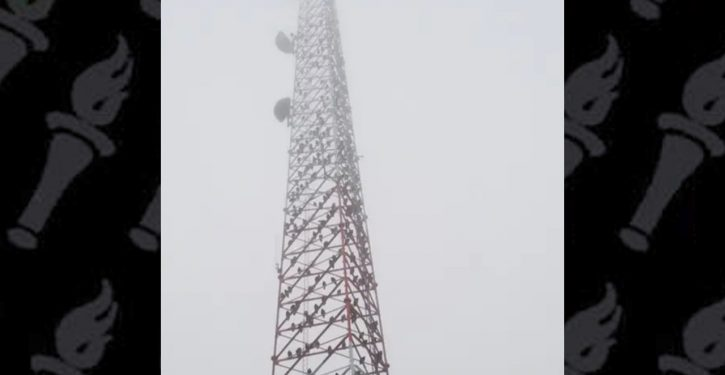 CBP radio tower has been losing battle against kettle of vultures using it as a toilet
