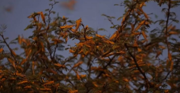 The (not that surprising) reason behind Africa's latest locust plague