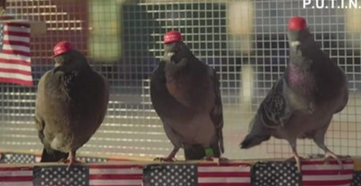 Anti-Trump group releases pigeons with MAGA hats glued to their heads in Las Vegas
