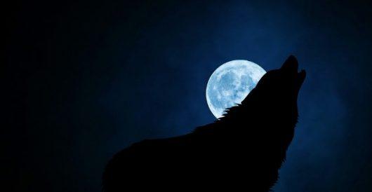 Forced utopianism: Awakening the 'werewolf' by Alexander Maistrovoy
