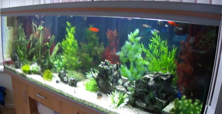 Toxicology report undermine's wife's story on fish tank cleaner fatality