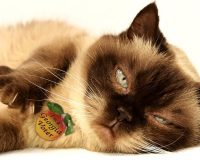 Beloved cat, long dead, receives by-mail voter registration form at owner's address