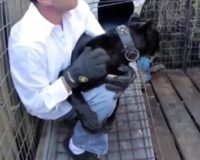 Fla. man pays $150 for 'full contact experience' with leopard, is promptly mauled