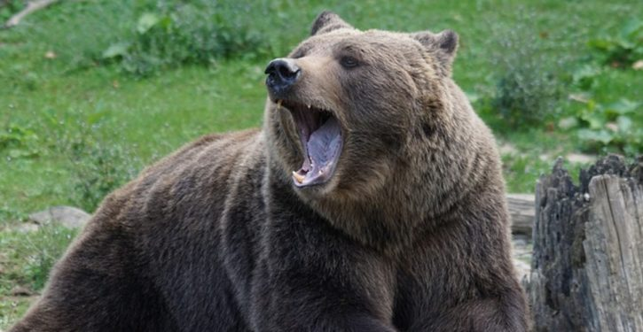 Russian authorities under fire after shooting bears that climbed onto a submarine