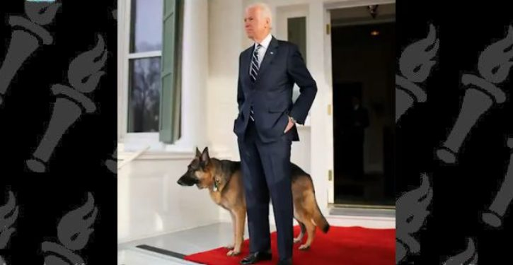 Biden dog bites another federal employee. Who should they send back to Delaware this time?