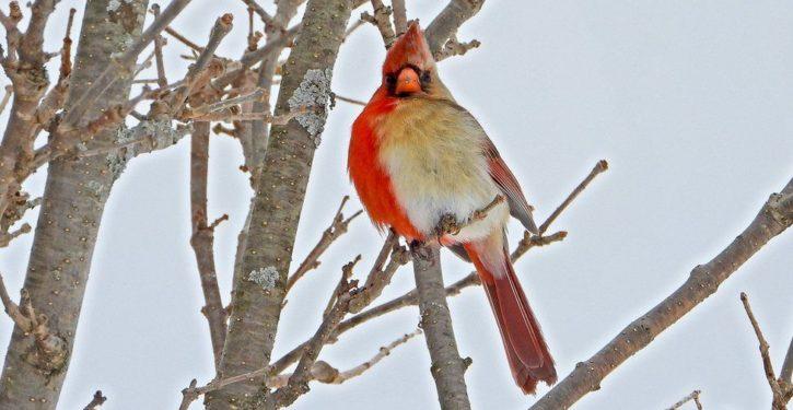 Rare bird — 'half-male, half-female' — photographed in Pennsylvania