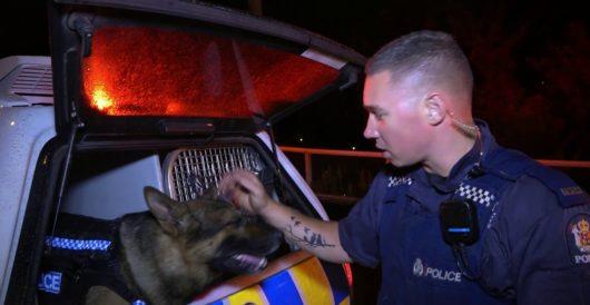 Disturbing video shows N.C. cop slamming K-9 into SUV during training by LU Staff